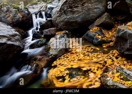 Pellice valley, Piedmont, Italy, Spinning maple's leaves inside a mountain little river, with a sweet falls in the - Stock Photo