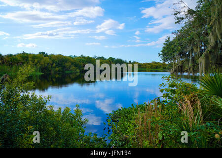 The mirror like surface of the Myakka River looks quite inviting to swim in but you may think twice when you see - Stock Photo