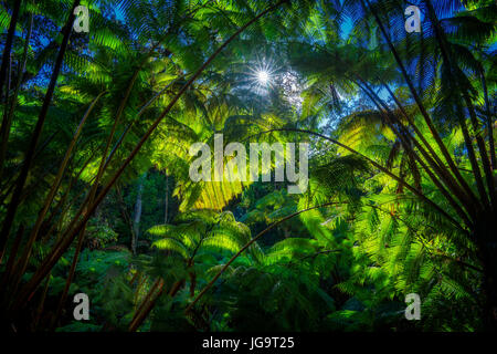 Rainforest and sunburst on trail to Thurston Lava Tube. Hawaii - Stock Photo