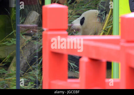 Berlin, Germany. 5th Jul, 2017. One of the two panda pears from China sits in the new enclosure at the Berlin Zoo, - Stock Photo
