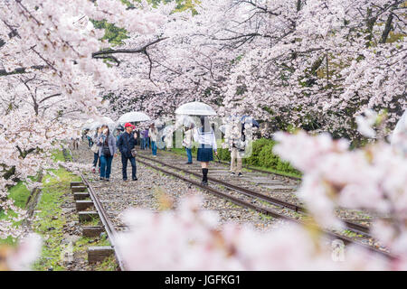 Kyoto, Japan - April 9, 2017: People enjoy spring season at Keage incline with sakura (cherry blossoms), Kyoto. - Stock Photo