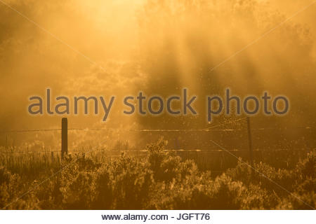 A barb wire fence in Montana's Greater Yellowstone Ecosystem. - Stock Photo