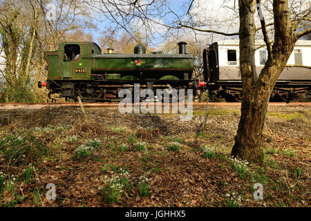 Snowdrops are in bloom beside the South Devon Railway as GWR 0-6-0 pannier tank No 6412 passes by, running bunker - Stock Photo