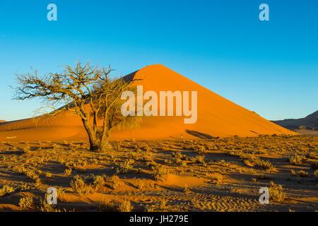 Giant Sand Dune 45, Sossusvlei, Namib-Naukluft National Park, Namibia, Africa - Stock Photo