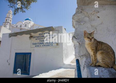 Katze verweilt im Schatten einer Gasse, orthodoxe Kirche im Kasteli Viertel, Pirgos, Santorin, Kykladen, Aegaeis, - Stock Photo