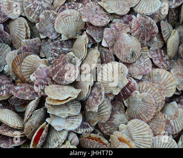 Scallop for sale at a seafood market in Nha Trang, Southern Vietnam. - Stock Photo
