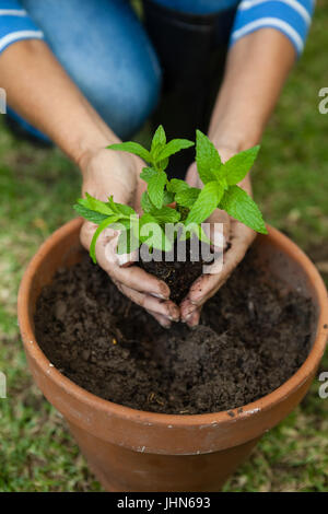 High angle view of senior woman planting seedling in pot at backyard - Stock Photo