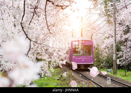View of Kyoto local train traveling on rail tracks with flourishing cherry blossoms along the railway in Kyoto, - Stock Photo