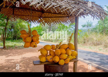 King Coconuts Are Displayed For Sell On Small Roadside Stall In Sigiriya. - Stock Photo