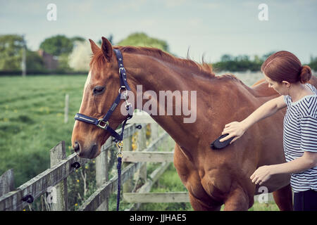 A young woman grooming her horse in a paddock. - Stock Photo