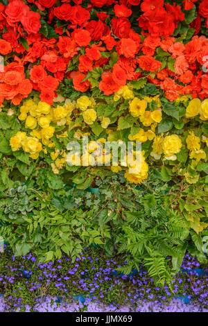 Rainbow Flag made from Flowers. Begonia, Lobelia, ferns, and ageratum - Stock Photo