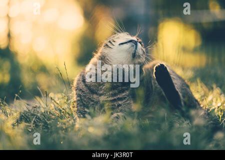 Flea cat - Stock Photo