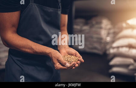 Close up shot of hands of master brewer with barley seeds. Employee examining the barley at brewery factory. - Stock Photo