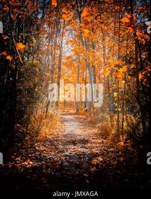 Path through autumn woods - Stock Photo