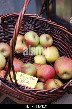 Basket of Fresh Picked Organic Fuji Apples - Stock Photo