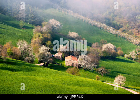 Spring Detail, Province of Bergamo, Italy. - Stock Photo