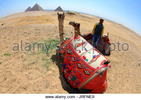 Egypt - Cairo - Pyramids site, camel and camel rider - Stock Photo