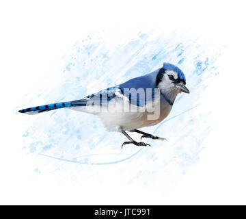 Digital Painting of Blue Jay - Stock Photo