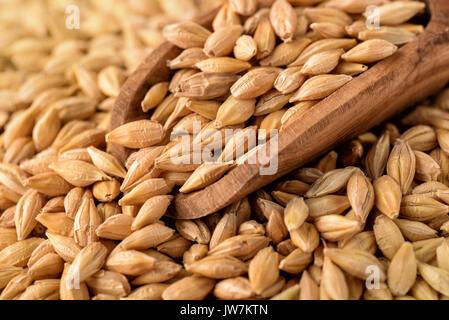 Close up of barley grains - Stock Photo