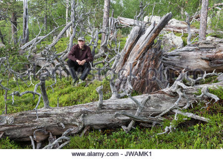 A man resting on a fallen tree in an old Scotch pine,Pinus sylvestris,forest. - Stock Photo
