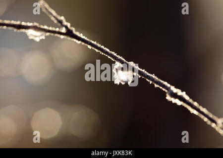 Frozen dew drops are glittering on bare birch twigs on an autumn morning. - Stock Photo