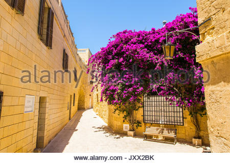 bench under a purple flowering bougainvillea in a narrow lane of mdina, malta - Stock Photo