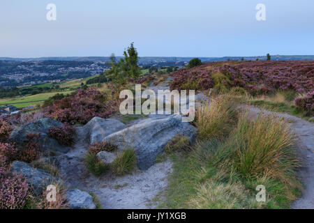 Norland, Halifax, West Yorkshire, UK 10th September, 2015. UK Weather Heather in flower on a beautiful day with - Stock Photo