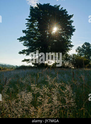 Early morning sun rays lighting meadow grasses through tree in the Welsh countryside - Stock Photo