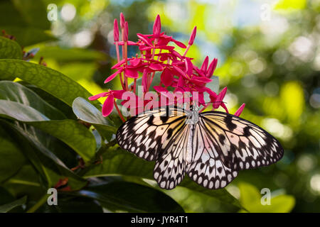 Butterfly on red flower at The Key West Butterfly and Nature Conservatory - Stock Photo