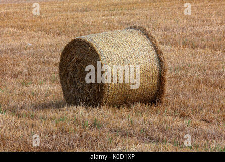 This years harvest of Wheat has been harvested by the local farmer with a 'Combine Harvester' leaving the bales - Stock Photo