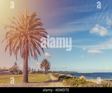 Row of palm trees along coastal walkway along Port Phillip Bay in Melbourne on bright sunny day - Stock Photo