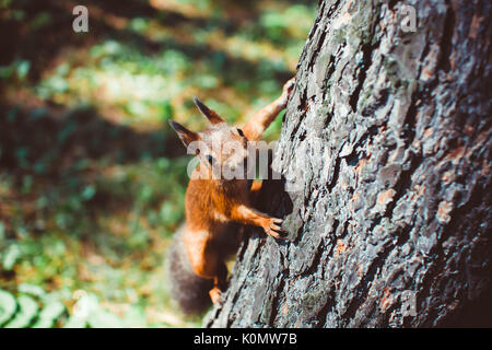 Small rodents on the trunk of a tree - Stock Photo