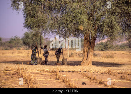 Niger, West Africa, Doutouel Village.  Village Women Pounding Millet to Make Flour under Shade of an Acacia Tree - Stock Photo