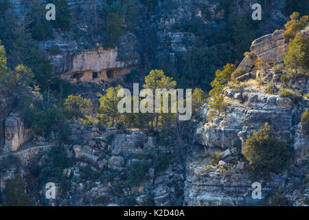 Ancient cliff dwelling rooms in rock face, Walnut Canyon National Monument, Flagstaff, Arizona, USA, February 2015. - Stock Photo