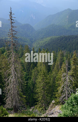 Landscape of Perucica primeval forest, one of Europe's few surviving rainforests, Sutjeska National Park, Bosnia - Stock Photo