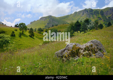 Alpine meadows with a profusion of wild flowers in Sutjeska National Park with the Zelengora mountain range, background, - Stock Photo