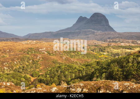 Hills of regenerating woodland across Assynt with Suilven in distance, Lochinver, Sutherland, Scotland, UK, May - Stock Photo