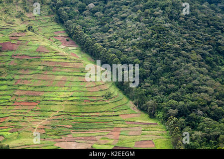 Deforestation for agriculture along border of Bwindi Impenetrable Forest NP, Uganda. - Stock Photo