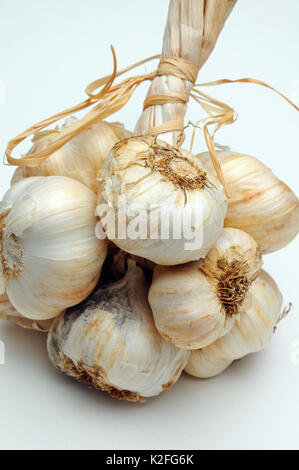 Solvent Wight garlic grappe against a plain background - Stock Photo