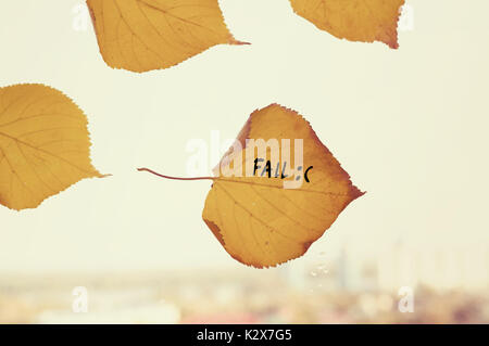 many yellow fallen leaves labeled fall stuck to the window on the skyline. Fallen autumn leaf in shape of heart - Stock Photo