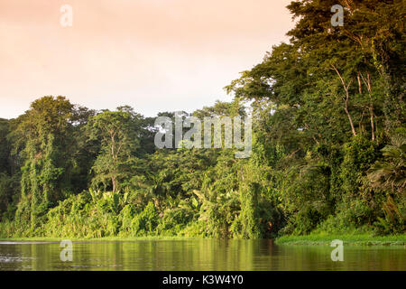 Tortuguero National Park, Costa Rica, view of the rainforest from a boat in the canals - Stock Photo