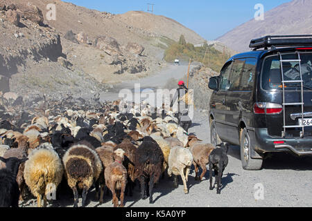 Car passing Tajik shepherd herding flock of sheep along the Pamir Highway / M41 in the Gorno-Badakhshan province, - Stock Photo