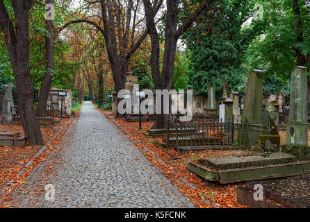 Alley with fallen autumnal leaves among old graves on Olsansky cemetery in Prague, Czech Republic. - Stock Photo