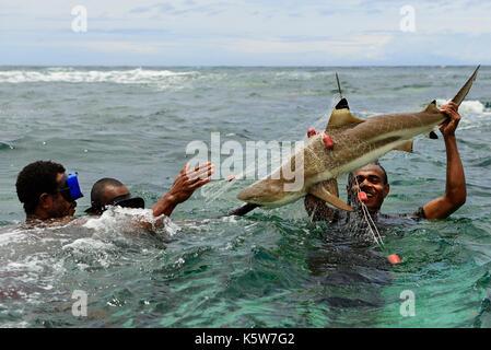 Korafe tribe, fishermen with speared Blacktip reef shark (Carcharhinus melanopterus), Yavi Village, Tufi, Papua - Stock Photo