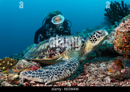 Scuba diver, Green Merress turtle (Chelonia mydas), Indian Ocean, Maldives - Stock Photo