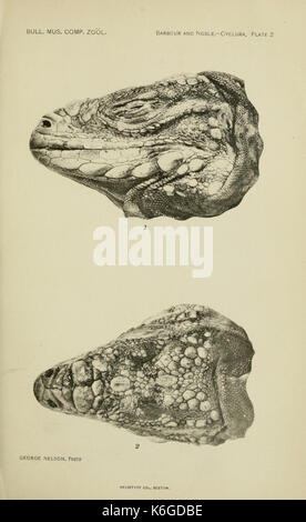 Bulletin of the Museum of Comparative Zoology at Harvard College (6074168993) - Stock Photo
