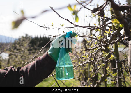 Close-up of mans hand spraying water on a tree - Stock Photo