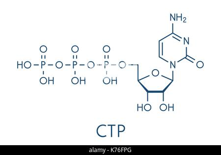 Cytidine triphosphate (CTP) RNA building block molecule. Also functions as cofactor to some enzymes. Skeletal formula. - Stock Photo