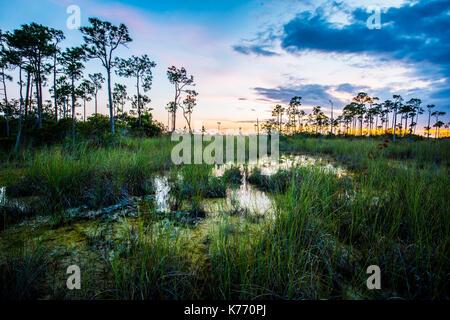 Everglades Sunset National Park lake reflections - Stock Photo