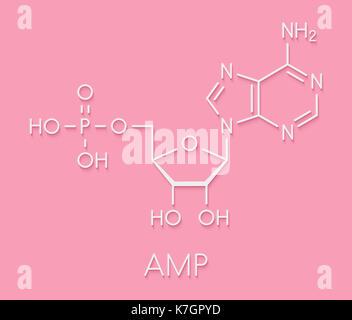 Adenosine monophosphate (AMP, adenylic acid) molecule. Nucleotide monomer of RNA. Composed of phosphate, ribose - Stock Photo